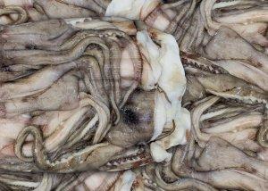 pesce-2618