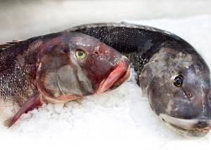 pesce-2293