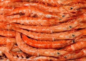pesce-2415b-r